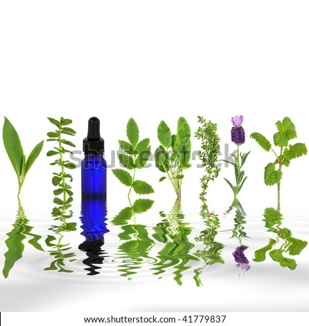 Herb leaf selection of comfrey, peppermint, valerian, sage, thyme, lavender and lemon balm with an aromatherapy essential oil glass dropper bottle with reflection in rippled grey water.