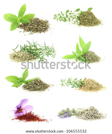 Herbs and spices collection - stock photo