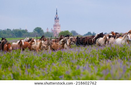 herd of horses is grazed early in the morning on a meadow - stock photo