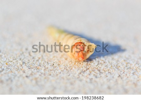 hermit crab on the tropical island thailand - stock photo