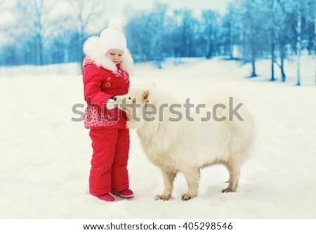 �hild feeding white Samoyed dog in winter day - stock photo