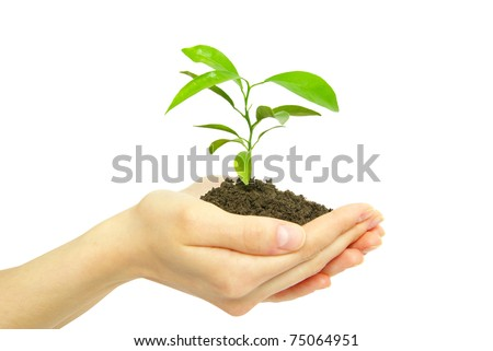 holding a plant between hands on white - stock photo