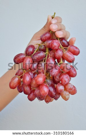 holding red grapes isolated on a gray background. - stock photo
