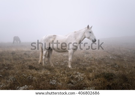 horse on a pasture in a mist - stock photo