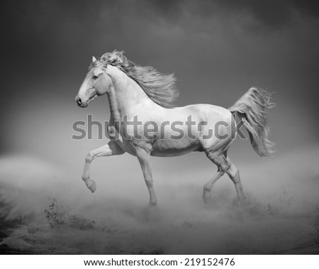 horse running in desert - stock photo