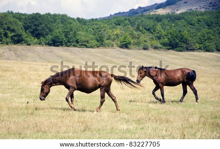 horses are feeding in steppe