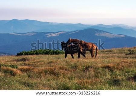 horses on the mountain pasture with mountains in the background - stock photo