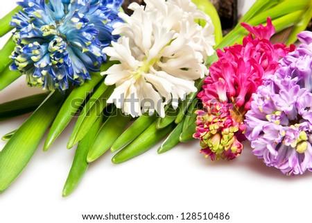 hyacinth isolated on white - stock photo