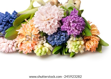 hyacinth isolated on white - stock photo