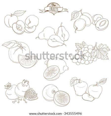 illustration Set of Outline hand drawn fruits with leaves( apple, pear, apricot, plum, orange, lemon, grape, pomegranate, grapefruit, peach) - stock photo