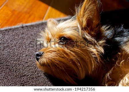 Image of a dog portrait - stock photo