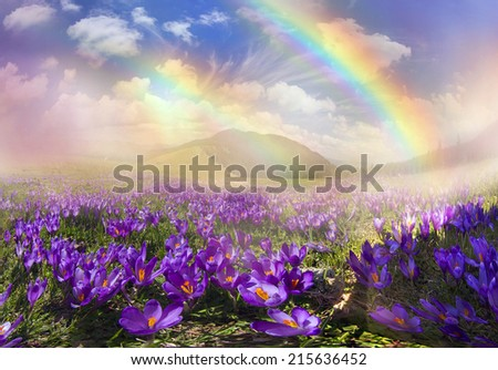 in March, April, May and mountainous areas in the Carpathians, Tatras and the Alps are covered by a carpet of beautiful flowers, crocus, crocuses. Delicate stalk and bell that stretches to the sun. - stock photo