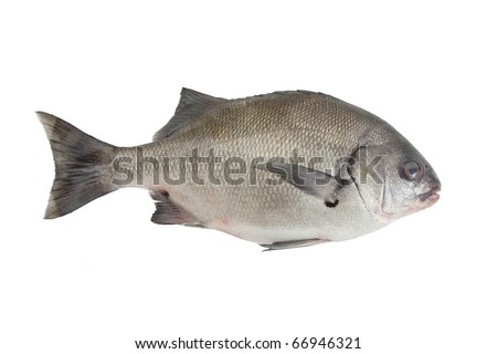 isolated fish at white background ,Anisotremus scapularis