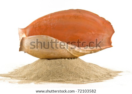 ,isolated marine shell on white, - stock photo