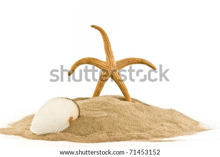 ,isolated marine star on white, - stock photo