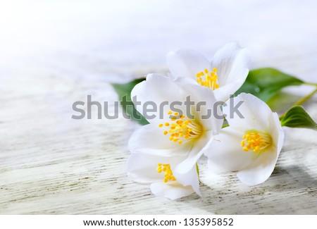 jasmine white flower on white wood background - stock photo