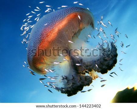 Jelly Fish Underwater Photo - stock photo
