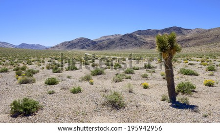 Joshua tree and desert wild flower in Death Valley National Park. - stock photo