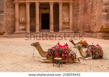 Journey to Jordan, Petra. Camels at the Treasury - stock photo