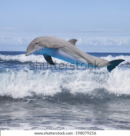 jumping dolphin, beautiful seascape with ocean waves - stock photo