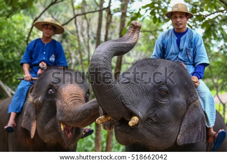 8 June 2016. : Tourist Thailand,Activities elephant bathing Thailand Elephant Conservation Center in Lampang Province Hang Chat district for tourists to come close to the Thai elephant.