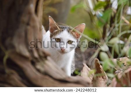 kitten behind the tree - stock photo