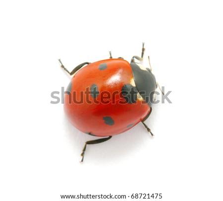Ladybug on the white - stock photo