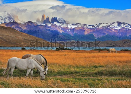Lake Laguna Azul in the mountains. On the shore of Lake grazing horses. Impressive landscape in the national park Torres del Paine, Chile - stock photo