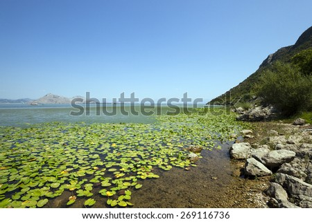 Lake Skadar located in Montenegro in summertime of year - stock photo