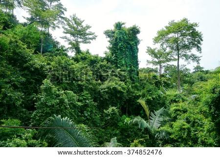 landscape tropical jungle - stock photo