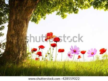 landscape with poppy flowers and single tree on white sky - stock photo