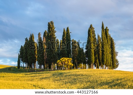 Landscapes of Tuscany, a group of cypress trees on a spring field. - stock photo