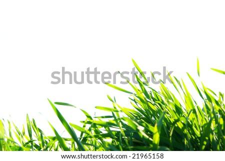 lawn - stock photo
