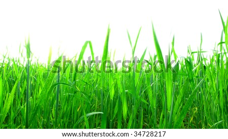 lawn isolated on white - stock photo