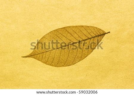 leaf skeleton over gold background - stock photo