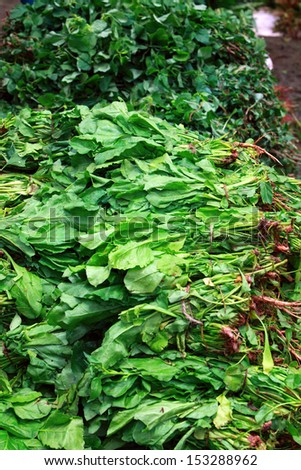 leafy vegetables at market - stock photo
