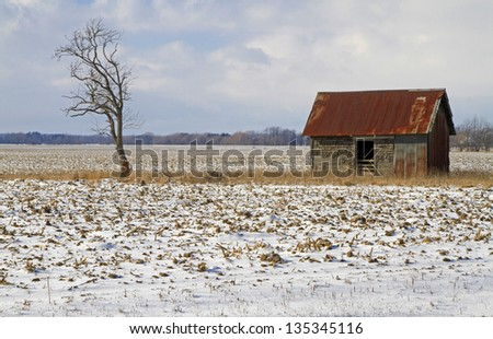 """Leaning"" -- An abandoned barn stands in the middle of a corn field with a nothing near by but a leaning tree. - stock photo"