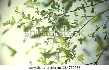 leaves and twig Tree on sky blurry lights background green vintage tone - stock photo