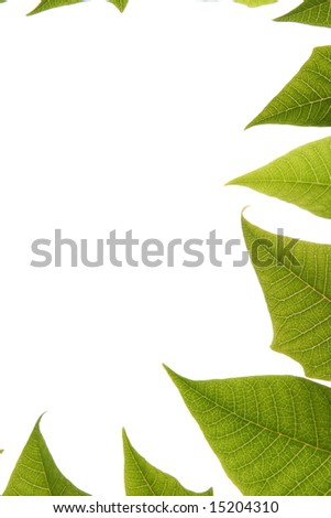 leaves border over white background
