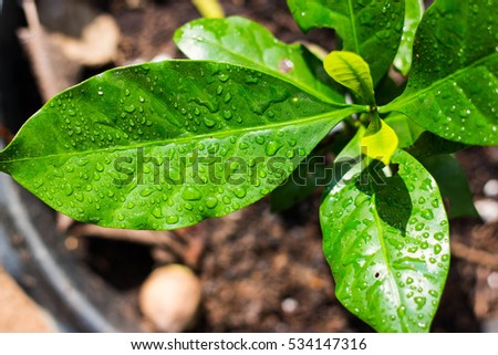 leaves coffee