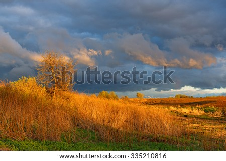 Leaving to the horizon  storm cloud at sunset over  field and  lonely tree in wind.  - stock photo
