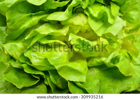 lettuce leaves  - stock photo