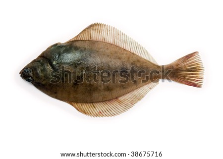 (Limanda limanda) Dab, Garve, Garve fluke, fresh caught lying on a light background