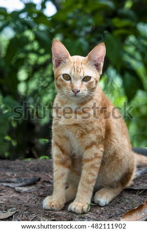 Little brown cat sitting pretty.