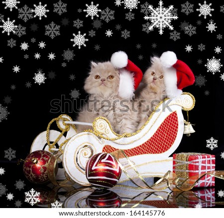 little kittens wearing red christmas Santa hat - stock photo