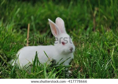 Little white rabbit on green grass in summer day - stock photo