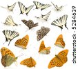 16 live butterflies in different positions in front of a white background - stock photo