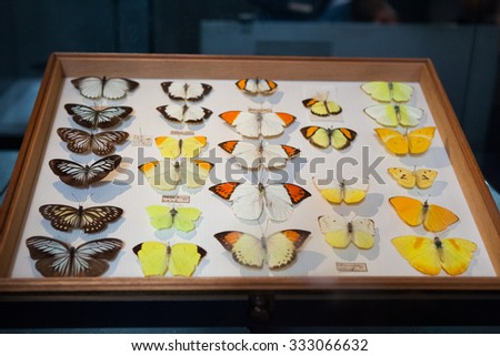 23. 07. 2015 LONDON, UK, Natural History museum - Insects once owned by Alfred Russel Wallace who co - discovered the theory of evolution by natural selection with Charles Darwin - stock photo