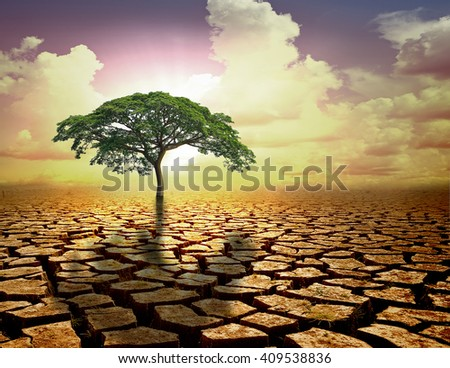 Lonely green tree under dramatic evening sunset sky at drought cracked. - stock photo