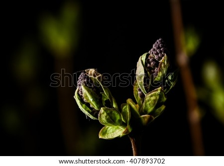 ?lose up of first spring green sprouts on tree branches - stock photo